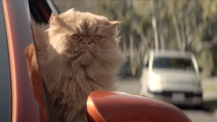 2013 Toyota Corolla: A Cat's Love Affair [VIDEO]