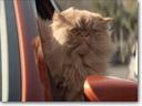2013 Toyota Corolla: A Cat