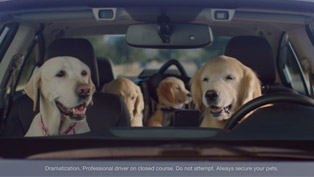 The Barkleys Return for the Latest Subaru Ad Campaign!
