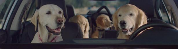 The Barkleys Return for the Latest Subaru Ad Campaign!