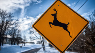 Avoiding Deer