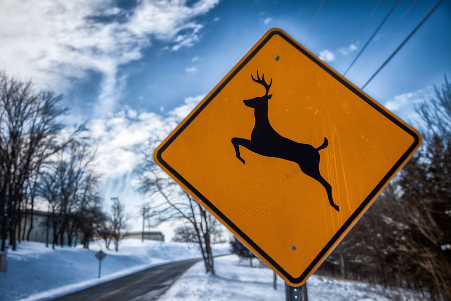 Watch-Out-Deer-Crossing
